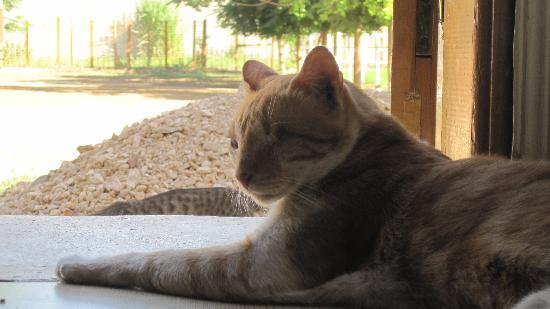 ACE- Animal Care in Egypt: Nelson the one-eyed cat watching the world go by!