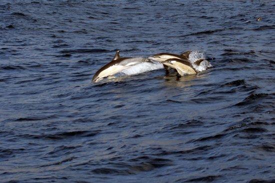 Quinta da Casa Branca: Dolphins by Funchal