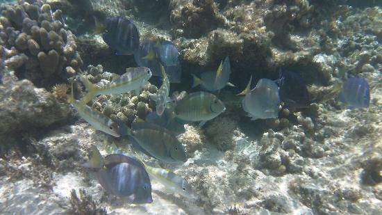 Peter Island Resort and Spa: Under the surface at big reef bay is thriving with life!