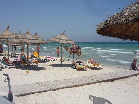 Helya Beach & SPA : the hotel's beach