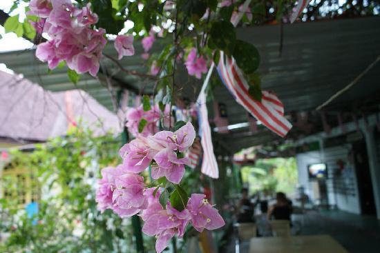 Shirin Homestay: flowers