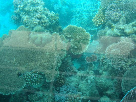 Airlie Beach, Australien: Coral on Knuckle Reef