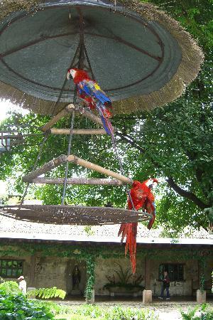 Hotel Museo Spa Casa Santo Domingo: Papageien im Innenhof