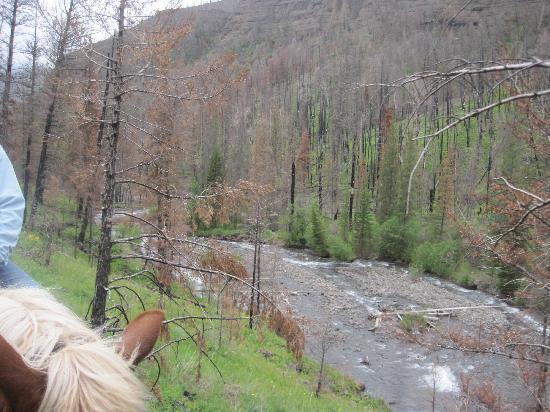 Absaroka Mountain Lodge: Trail ride