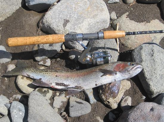Absaroka Mountain Lodge: Gunbarrel Creek Trout