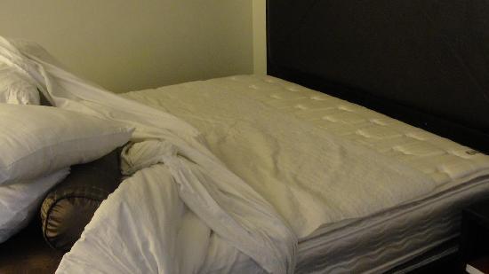 Sheraton Anaheim Bed Bugs
