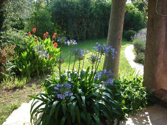 L'Air du temps : Agapanthes du jardin