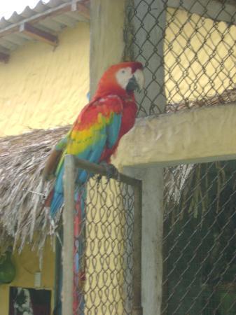La Buena Vida Hotel- Ayampe: Rain Forrest Birds in Rehab