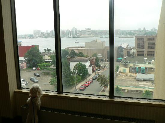 Dartmouth Oceanview Hotel: view from the front rooms (if you dont' have a pet)