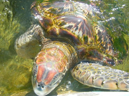 Ogasawara-shoto, Japan: 【注意】ウミガメ産卵時は静粛に!