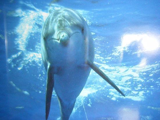 Ogasawara-shoto, اليابان: 【超凄】イルカと泳げる!!!!!!!!!!!!!!!!!!!!!!!!!!!!!!!!!!!