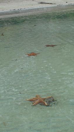 Bocas Town, Panama: Playa Estrella