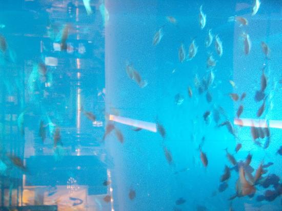 J5 Rimal : Aquarium Dubai Mall
