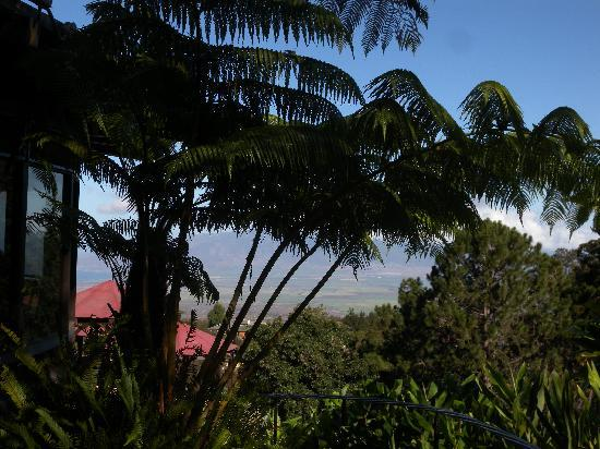 The Kula Lodge: View from our lanai