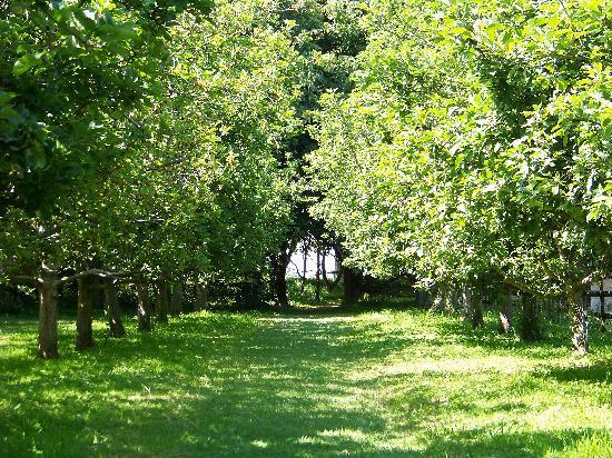 La Mare Wine Estate: Apple Orchard