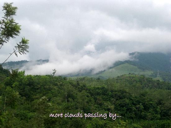 Kalpetta, India: valley view