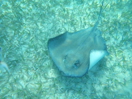 Belize Tradewinds Paradise Villas: Stingray