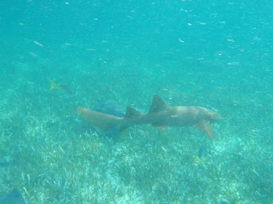 Belize Tradewinds Paradise Villas: Snorkeling