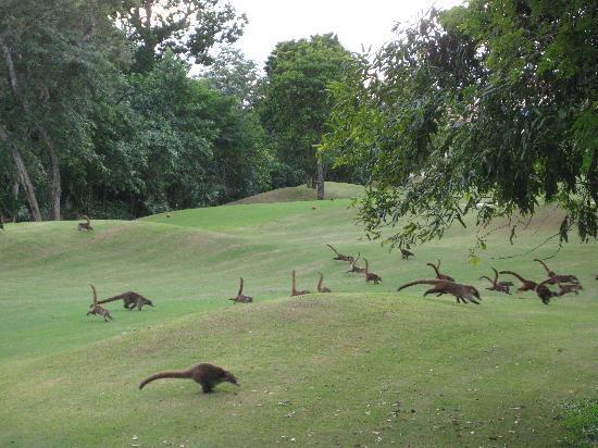 Playacar Golf Club: local wildlife