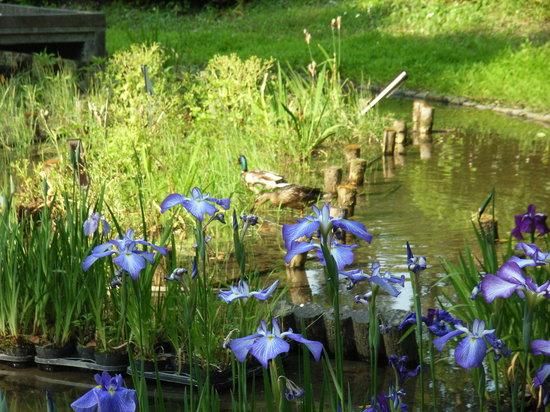 京都府立植物园