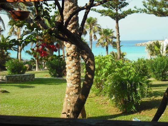 Nissi Beach Resort : gardens