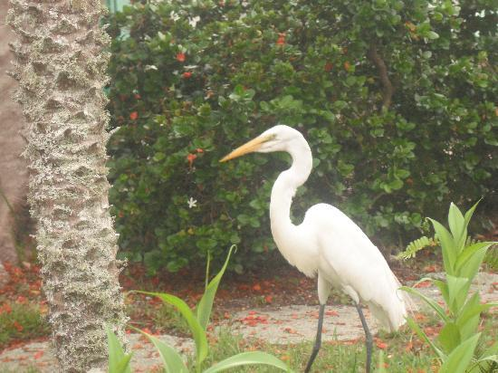 Siesta Key Beach Place : long time resident of The Beach Place who you may come in contact with