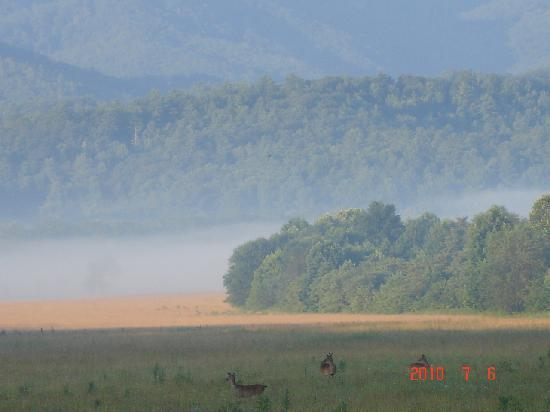 Townsend, Теннесси: Cades Cove in the morning!