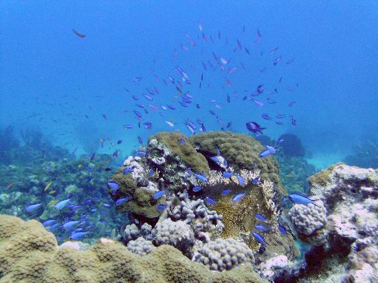 Stella Maris Resort Club : Excellent scuba diving opportunities!