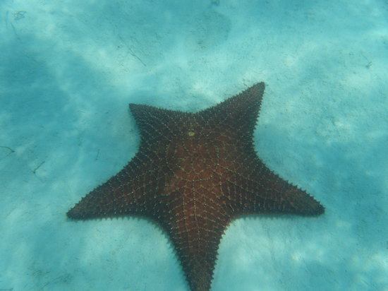 Starfish The Exuma Adventure Center: Starfish Beach