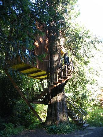 Treehouse Point: what a delight!