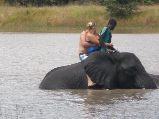 Gweru, Zimbabwe: elephant swimming