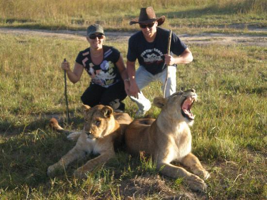 Gweru, زيمبابوي: lion walk