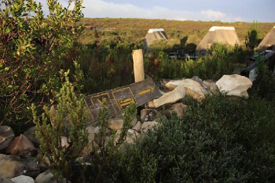 Buchu Bushcamp: The walkway