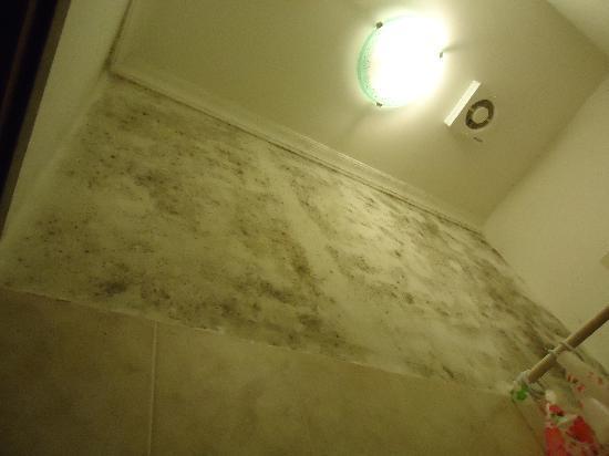 Black mold on the bathroom wall picture of bed breakfast prince inn rome tripadvisor - Black mold in bathroom wall ...