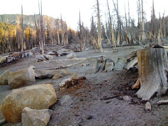 Mammoth Lakes, Kalifornien: weißer Wald