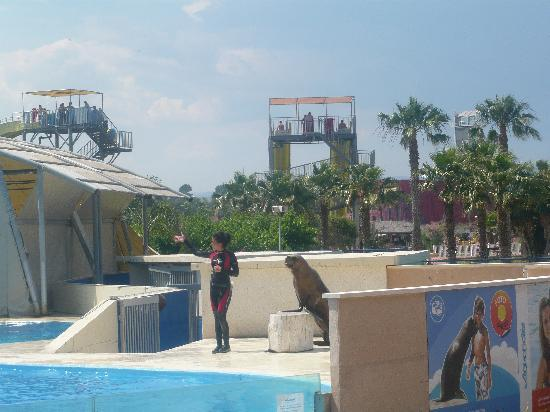 Estival Park Salou: aquapolis waterpark