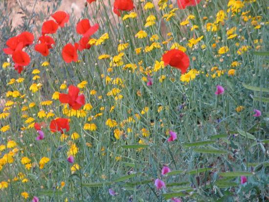 Casa Granadina: wildflowers