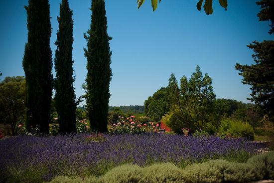 Mas Laurent : The lavendar garden