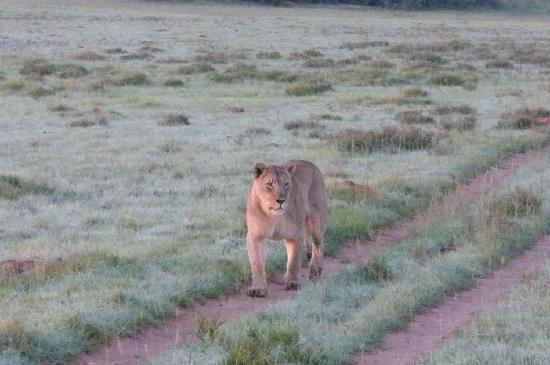 Shamwari Game Reserve Lodges: Es war schon ein bisschen unheimlich