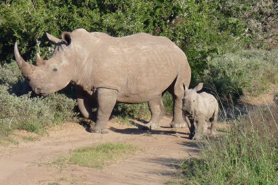 Shamwari Game Reserve Lodges: Das Warten hat sich gelohnt