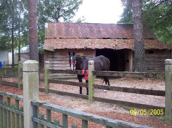 Steinhatchee, FL: Mule Barn