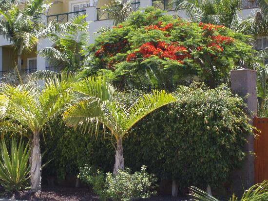 Cordial Mogan Playa: Fantastic planting at hotel