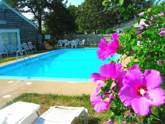 Old Landing Motel: Pool