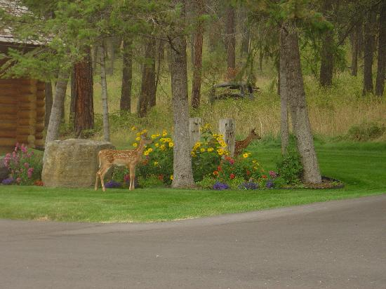 Somers Bay Log Cabin Lodging: Our Special Guests