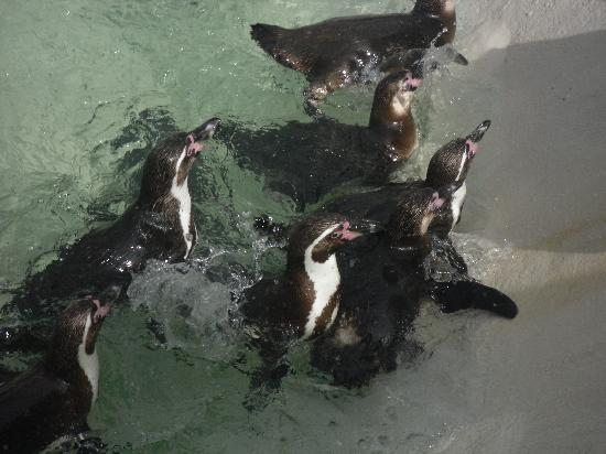 Newquay, UK: Crazy Penguins