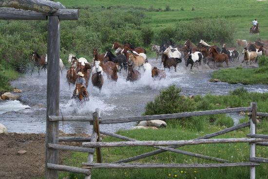 Paradise Guest Ranch: Leading the horses out to pasture