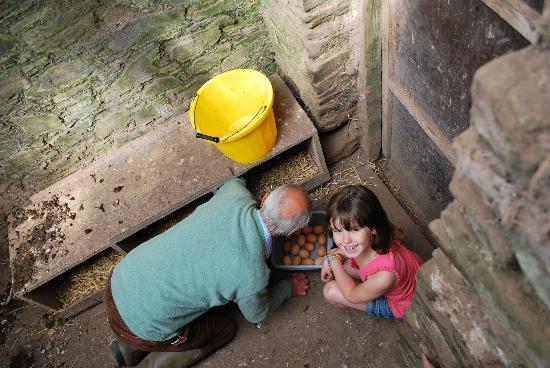 Ballyvolane House: collecting the morning eggs