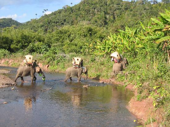 Green Discovery: Elephant Adventures trekking