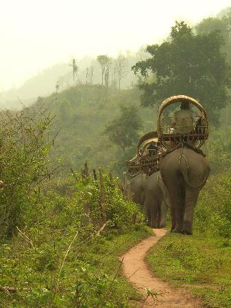 Elephant Adventures by Green Discovery Laos: Elephant Adventures trekking in the forest