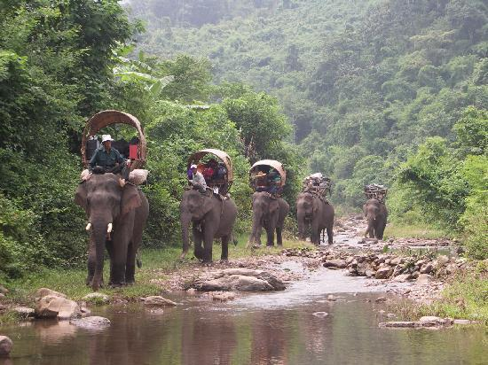 Green Discovery: Elephant Adventures trekking along the river